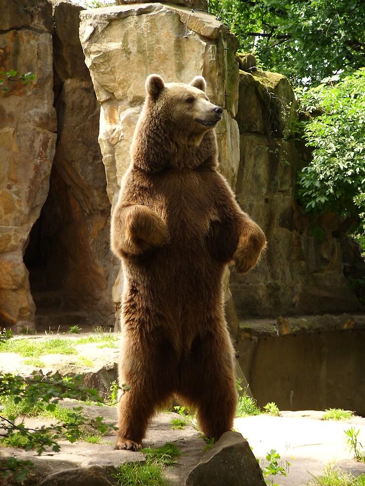 Bear by Paul Leslie