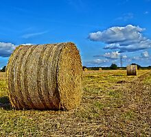 Round straw bales by ANDREW BARKE