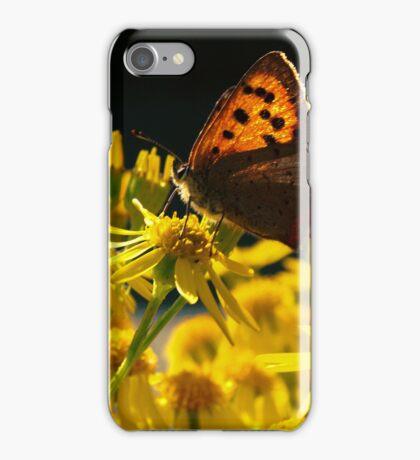 Butterfly on Ragwort iPhone Case/Skin