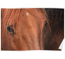 Horse hide Poster