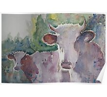 Cows - 1  Poster