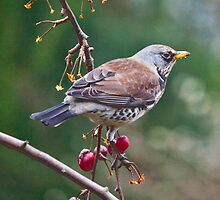 British Birds by Krys Bailey