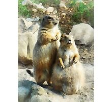 Prairie Dog Formal Portraits Photographic Print