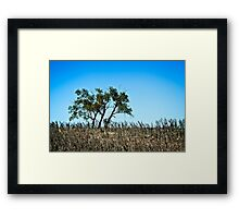 lone rural country tree Framed Print