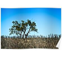 lone rural country tree Poster