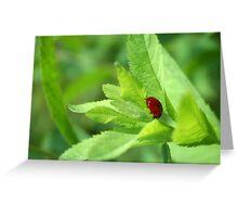 Ladybug, Ladybug Greeting Card