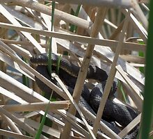 Snake In The Reeds 2 by ImaginaryBee