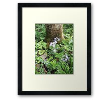 Flowers Gracing The Tree Trunk Framed Print