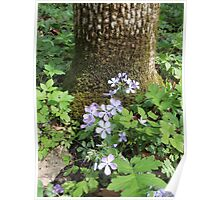 Flowers Gracing The Tree Trunk Take 2 Poster