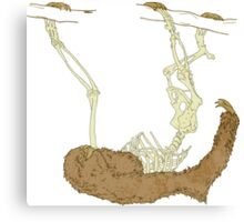 Skeleton Of A Sloth Canvas Print