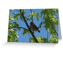 Resident Baby Robin 3 Greeting Card