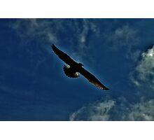 Glide Photographic Print