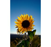 Sunflower in Vermont - 01 Photographic Print