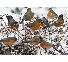 Winter Feast Photographic Print