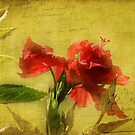 Ageless Hibiscus by Judy Clark