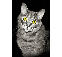 Pixie the Cat Photographic Print