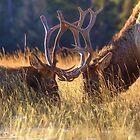 Elk 2 Elk by JamesA1