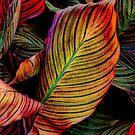 Leaves by Cindy Crossley
