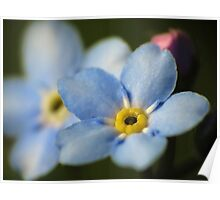 Forget-Me-Nots 12 Poster