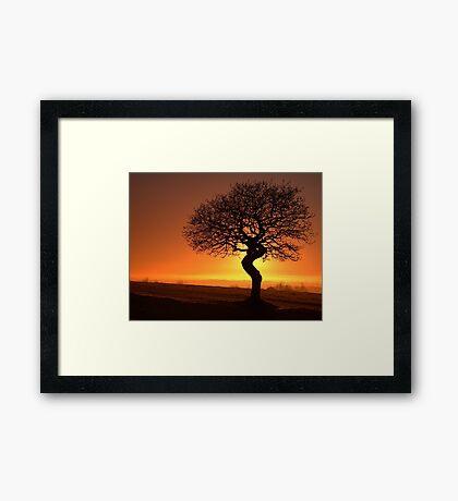 Twisted Oak Silhouette Framed Print