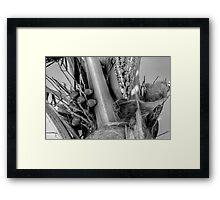 Coconut Palm in Nassau, The Bahamas Framed Print