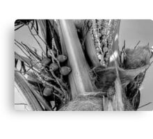 Coconut Palm in Nassau, The Bahamas Canvas Print