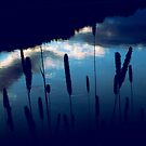 Nature is my Center Core II- Cattails by MJD Photography  Portraits and Abandoned Ruins