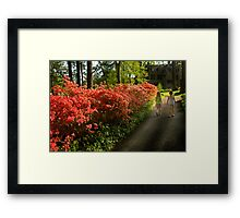 Out of the Azalea Woods Framed Print