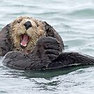 Happiness is a wet otter by Anthony Brewer