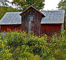 Red Barn and Black-Eyed Susans by cammisacam