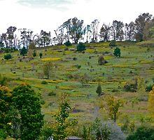 Hillside Pasture by cammisacam