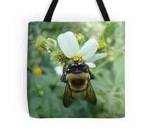 Bumblebee on Bidens alba (Spanish Needles) Tote Bag