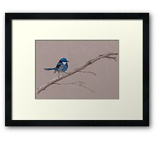 Splendid Fairy-Wren Framed Print
