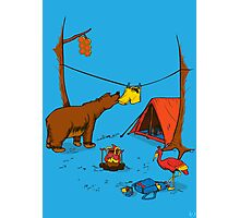 Bear and Bird Photographic Print