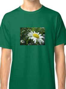 Close Up Common White Daisy With Garden  Classic T-Shirt