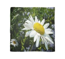 Close Up Common White Daisy With Garden  Scarf