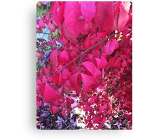 Oh! The frill of it all! Canvas Print
