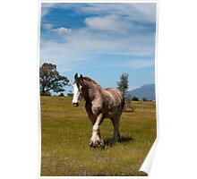 Grampians Clydesdale Poster