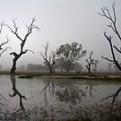 A Moody Giblings Swamp by Janette Rodgers