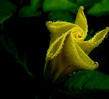 Yellow Bud by mercale