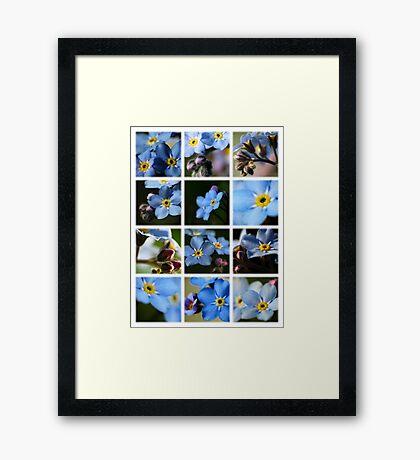 Forget-Me-Nots Montage 1 Framed Print