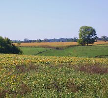 INDIANA FARMLANDS by Pauline Evans