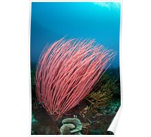 Stand of red coral  Poster