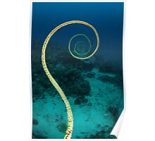 Spiral coral Poster