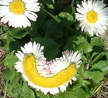 Happy Daisies by Mike Lester