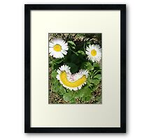 Happy Daisies Framed Print