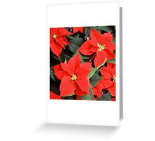 Beautiful Red Poinsettia Christmas Flowers Greeting Card