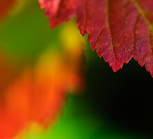 Autumn leaves by marina63