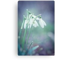 Snowdrop glimmers of hope Canvas Print
