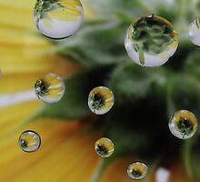 Sunflower by Susan Littlefield